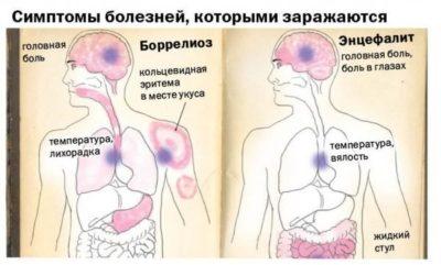 Картинка 7